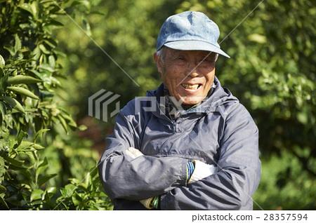 檸檬農夫 28357594