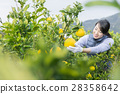 妇女的农业形象 28358642