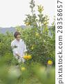 橘子農民 28358657