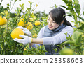 妇女的农业形象 28358663