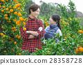 คู่สามีภรรยา,เกษตรกรรม,ชาวนา 28358728