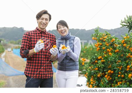 橙色農夫婦 28358759