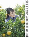 婦女的農業形象 28358835