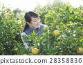 妇女的农业形象 28358836