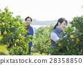種田夫婦的圖像 28358850