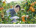 ภาพลักษณ์การเกษตรของสตรี 28358880