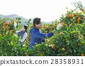 คู่สามีภรรยา,เกษตรกรรม,ชาวนา 28358931