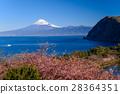 카와 벚꽃 피는 니시 이즈 아이다에서 바다 너머의 후지 산 28364351