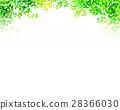 翠綠 鮮綠 葉子 28366030