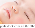 baby, infant, face 28366702