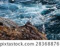 นก,มหาสมุทร,ชายฝั่งทะเล 28368876