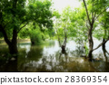 公園 翠綠 鮮綠 28369354