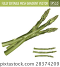 芦笋 蔬菜 插图 28374209