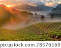 Strawberry farm at Doi Angkhang, Chiangmai 28376160