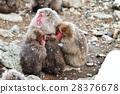 원숭이 가족 28376678