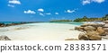 Flamingo beach at Aruba island 28383571