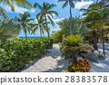 Flamingo beach at Aruba island 28383578