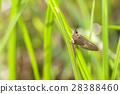 แมง,แมลง,ผักใบ 28388460