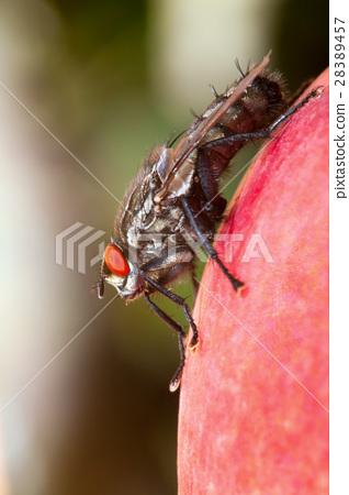 big fly - macro 28389457