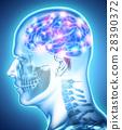 Human Internal Organic - Brain. 28390372