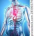 3D illustration of Heart, medical concept. 28390374