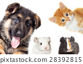 set pet peeping on a white background 28392815