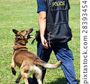 Police man with his dog 28393454