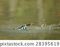 นก,แหล่งน้ำ,สระน้ำ 28395619