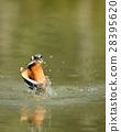 นก,แหล่งน้ำ,สระน้ำ 28395620