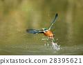 นก,แหล่งน้ำ,สระน้ำ 28395621