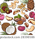 Seamless pattern of walnut, coconut, cashew, kola 28396586