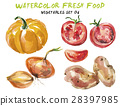 Watercolor vegetables isolated on white 28397985
