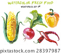watercolor, vegetable, white 28397987