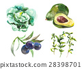 Watercolor vegetables isolated on white 28398701