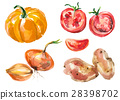 Watercolor vegetables isolated on white 28398702