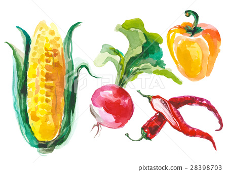 Watercolor vegetables isolated on white 28398703