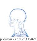 骨头 骨骼 骨架 28415821