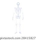 骨頭 骨骼 骨架 28415827