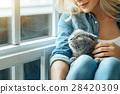 pet, cat, woman 28420309