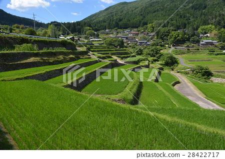 Rice terraces in Gifu prefecture 28422717