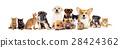 set pets 28424362