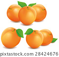 groups of different fresh apricots 28424676