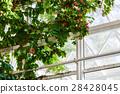Plant on window background 28428045