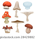 Mushrooms Set 28429882
