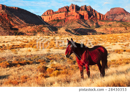 Horse in Zion National Park 28430353