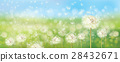 dandelion, field, spring 28432671