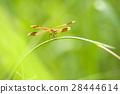 蜻蜓 蟲子 漏洞 28444614