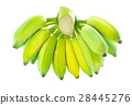 Green banana isolated on white background 28445276
