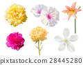 Set of various beautiful flowers isolated 28445280