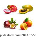 熱帶 水果 一組 28446722